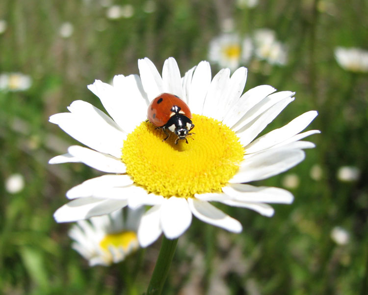 Насекомые фото картинки бабочки