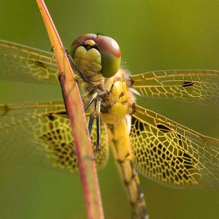 как стрекоза ловить насекомых в террарии
